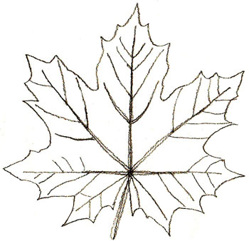 draw-leaves