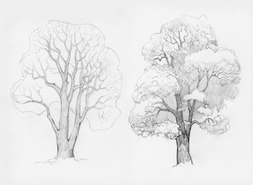 how-to-draw-oak