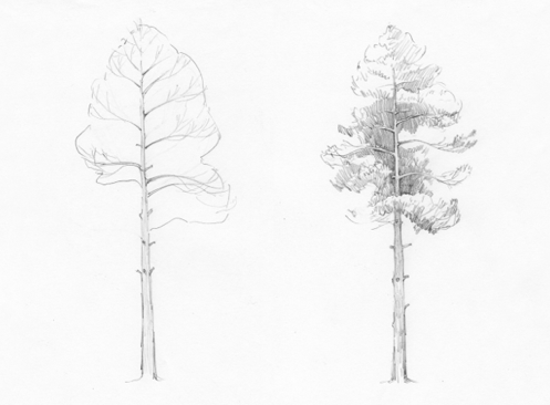 how-to-draw-pine-tree