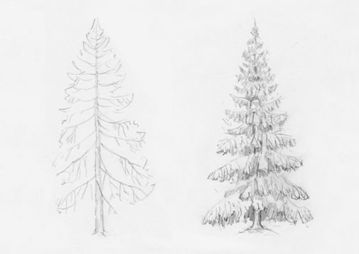 how-to-draw-spruce-tree