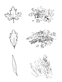 Imitation of foliage by hatching.