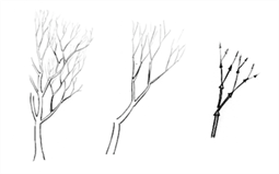 The fractal principle of the hierarchy of tree branches