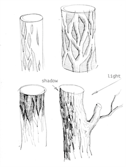 The structure of the tree bark most often is a crack